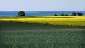 öppna landskap