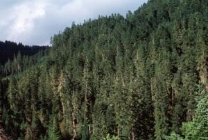 skog-timmer-investering
